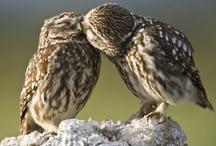 Avian Allure / by Angela Manus