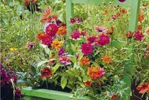 Garden Tips and Ideas. / by Tiffany Stahl
