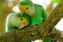 Birds / by Leona Eunice Gentry