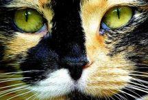Cats / by Leona Eunice Gentry