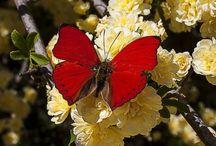 Butterflies & Moths / by Leona Eunice Gentry