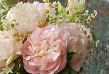 Roses / by Leona Eunice Gentry