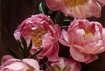 Flowers / by Nicole Balch