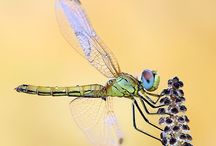 Dragonflies, Bees, Insects and Spiders / by Leona Eunice Gentry