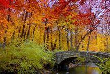 Autumn / by Leona Eunice Gentry