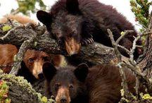 Bears / by Leona Eunice Gentry