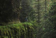 Wild Wood / by Sarah Wednesday