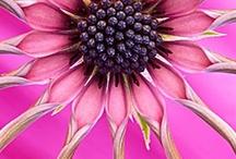 Flowers / by Trudee Burrelle