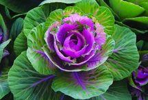 Flowers, Plants, Garden, & Yard Ideas / by Sarah Smith