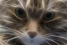 A-Cat's Meowwwwww / by MaryBeth Carpenter