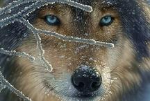 A-Wonderful Wildlife  / by MaryBeth Carpenter