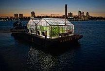 Green House Ideas / by Eddie Mathis
