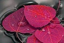 Palette: PlumBerry / Warm/Red-toned purples--berry, plum, aubergine, warm dusty purple, etc. / by DesertFlower