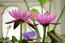 Flower Power / Flora and Fauna Flower Power  #flowers    #rickimountain / by Ricki Mountain