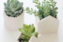 Green Ideas / by Alejandra Plaza