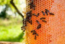 Bees & Beekeeping / by Alejandra Plaza