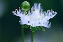 Beautiful Blooms. . . . . / by Sarah L. Vargas