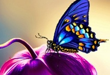 BUTTERFLIES are Beautiful. . . . . / by Sarah L. Vargas