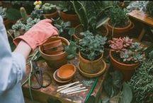 Garden / by Dawn Mead