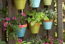 Outdoors & Gardening / by Jill Carson