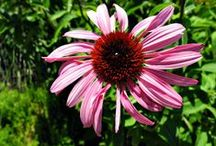 Flowers & Butterflies / Beautiful flowers and butterflies / by Julie Cohn