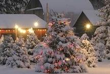 Christmas Trees / by Debbie Morton-Copelin