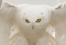 Whoo You Lookin At / by Debbie Morton-Copelin