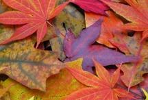 Cozy Toasty Fall / by Debbie Morton-Copelin