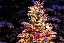 HOLIDAY: Christmas {Yule} / by Sara Rorebeck