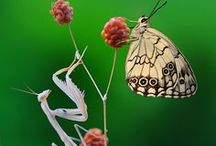 Bugs/insects/spiders / by nancy j