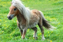 Mini Horses / by April Ridley