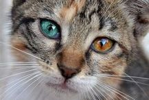 Cat's / by Donna Spargur