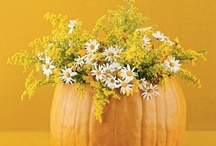 Decorating Ideas / Decorating ideas for the Inn or your home / by Thomas Shepherd Inn