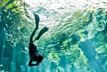 Scuba Diving / by Sar Walk