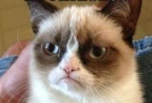 ✿ Grumpy Cat ✿ / Cutest Gurmpy Ever!  / by ♥ Debbie