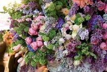 ✿ Flower Abundance ✿ / by ♥ Debbie