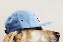 dog / by Charlotte Raffo