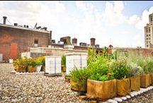 Urban Gardening / by Dana Bueno