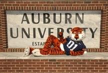 All Things Auburn / by Martha Carlin