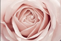 ~Pale Pink~ / The Most Sophisticated Yet Sweet Color / by Cici Bianca