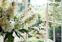~Through the Window~ / by Cici Bianca