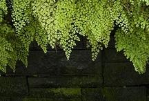 Flora / by Village