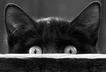 Cats / by RaRa Ka