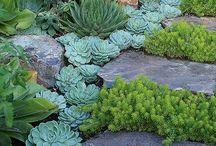Yard and Garden / by Chanda Ciriacks Klinker