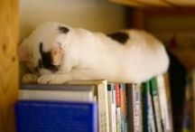 Home Libraries / First and foremost. ..every library needs a cat...or is it that every cat needs a library, or maybe just paper, since every time my cat spots a piece of paper h / by Chris Langdon