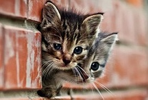 CATS BIG AND SMALL / by Cindy Fallone