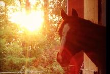Horse Stuff! / Everything Horse / by Jodi Steinhoff