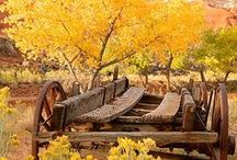 Everything Fall & Thanksgiving  / by Teresa Rybczyk