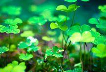 St. Patricks Day / by Aspen C754