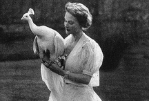 Peacocks / My love of peacocks!!!! / by Francena Austin